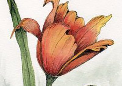 FEBRUARY 7-28 | Pen and Ink Classes with Dianne Darch