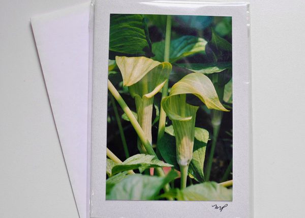 Jack-In-The-Pulpit – Photo Card