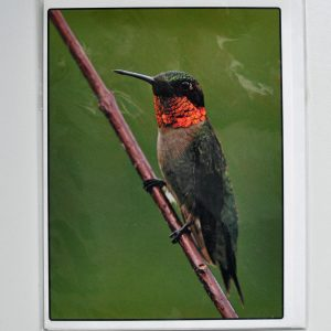 Humming Bird – Greeting Card