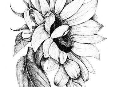 OCTOBER 19 – NOVEMBER 9 | Pen and Ink with Dianne Darch on Zoom